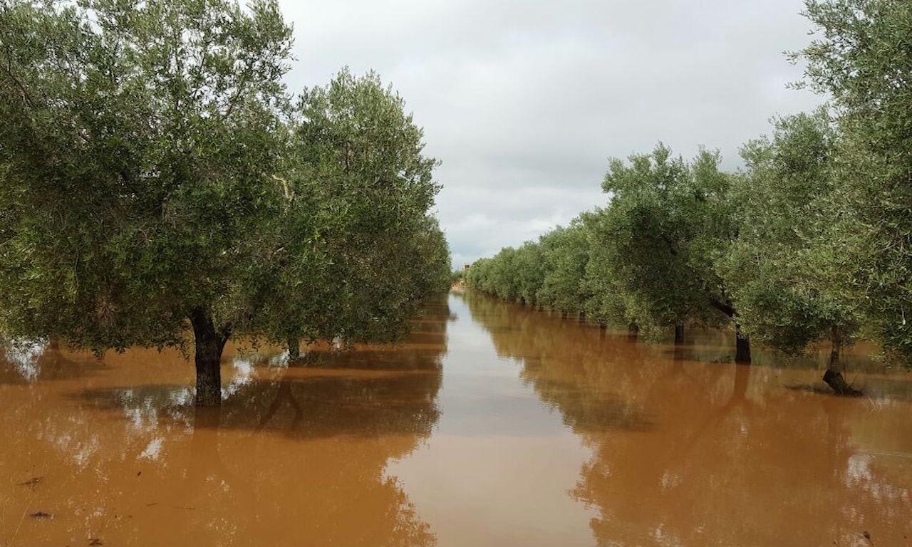 Un'immagine di campi agricoli allagati in Puglia
