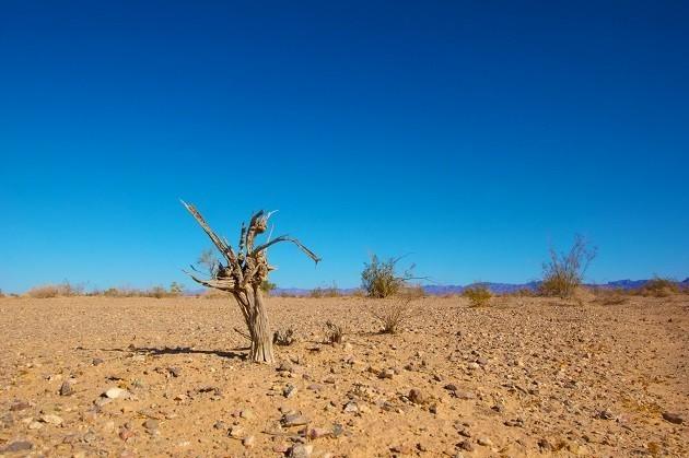 Un terreno incolto a causa del caldo e della mancanza di precipitazioni
