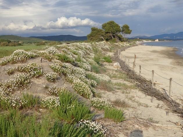 Una fotografia di dune in una zona costiera della Toscana