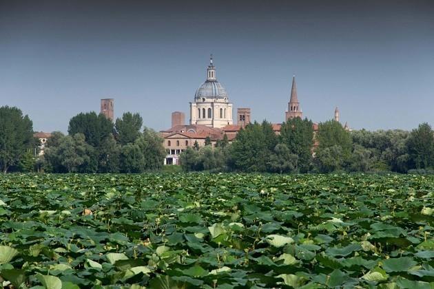 "immagine di una ""foresta urbana"" a Milano"
