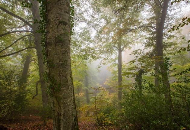 L'immagine di una foresta umbra