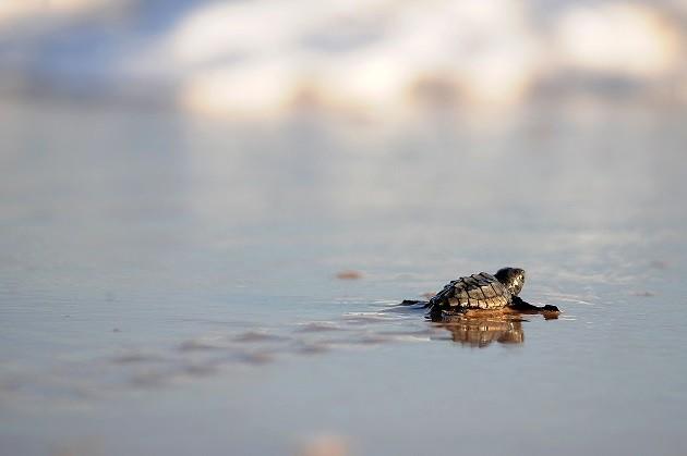 La fotografia di una tartaruga marina
