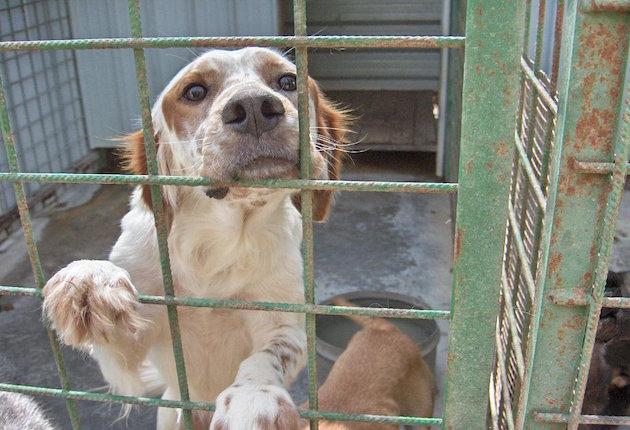 Un'immagine di un cane in gabbia