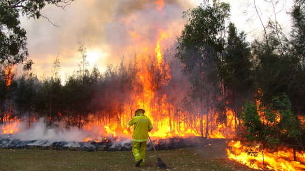 immagine di un in incendio in una foresta australiana