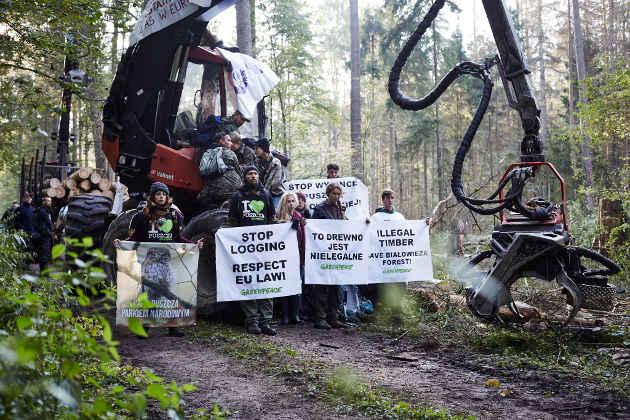 Attivisti a difesa della foresta di Bialowieza