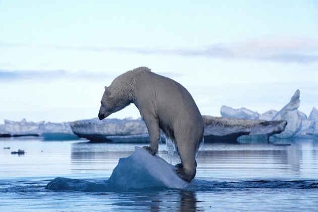 La fotografia di un orso polare
