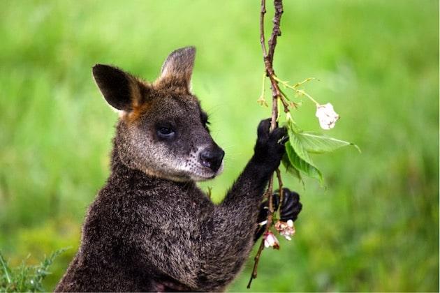 biodiversità Australia