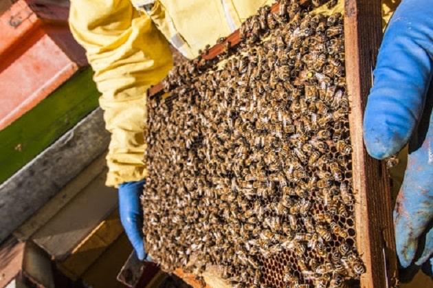 Congresso nazionale apicoltori 2020