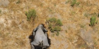 Botswana elefanti morti