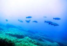 Ustica area marina protetta