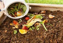 Compost raccolta