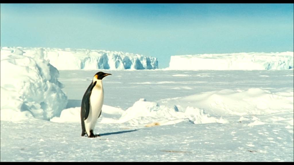 20090115172636!La_marcia_dei_pinguini