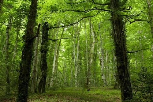 immagine di un bosco