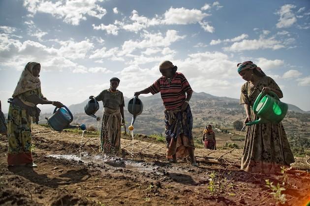 L'immagine di donne africane al lavoro nei campi