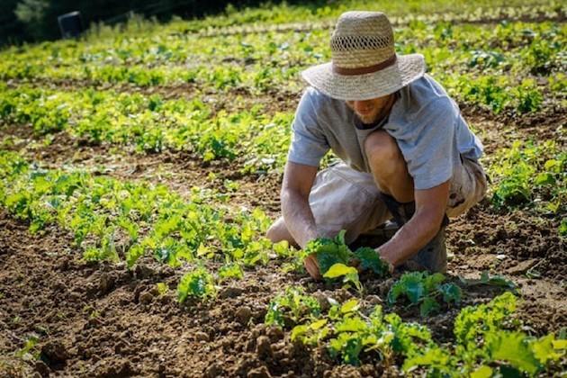 L'immagine di un agricoltore