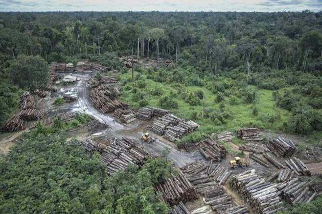 Amazzonia deforestazioni