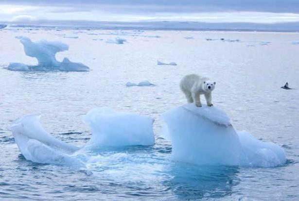 L'immagine di un orso polare nell'Antartide