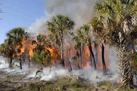foto di una foresta tropicale in fiamme