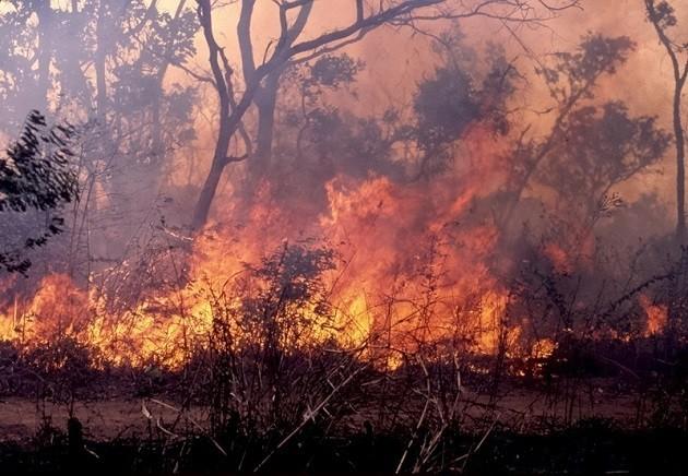 Immagine incendio foresta bacino Congo
