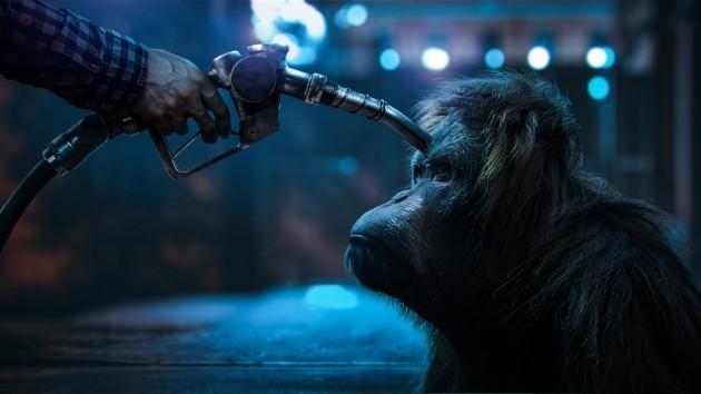 """immagine di un orango con una """"pistola"""" puntata contro"""
