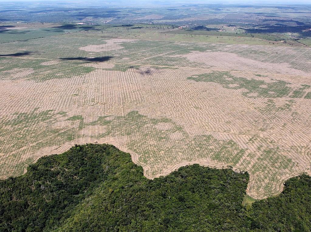 ue Corresponsabile Della Deforestazione In Brasile
