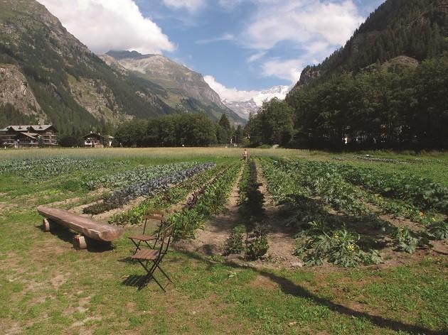 immagine di un orto sul Monte Rosa