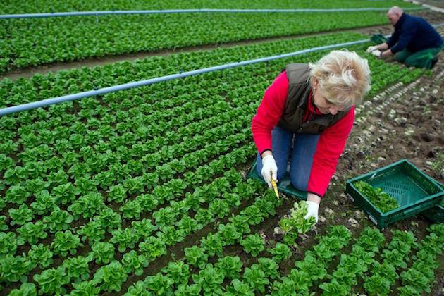 L'immagine di un due persone che coltivano delle piante in un terreno