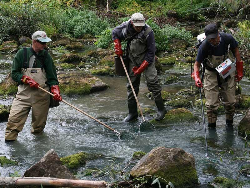 divieto della pesca elettrica