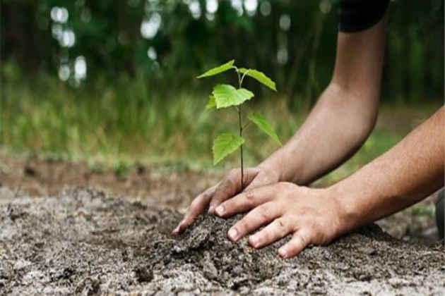 Sessanta milioni di alberi da piantare, appello della Comunità Laudato sì