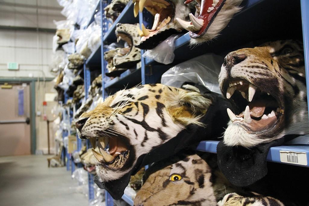 Racing Extinction Tiger Skins