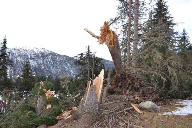Un'immagine dei danni causati dalla tempesta Vaia