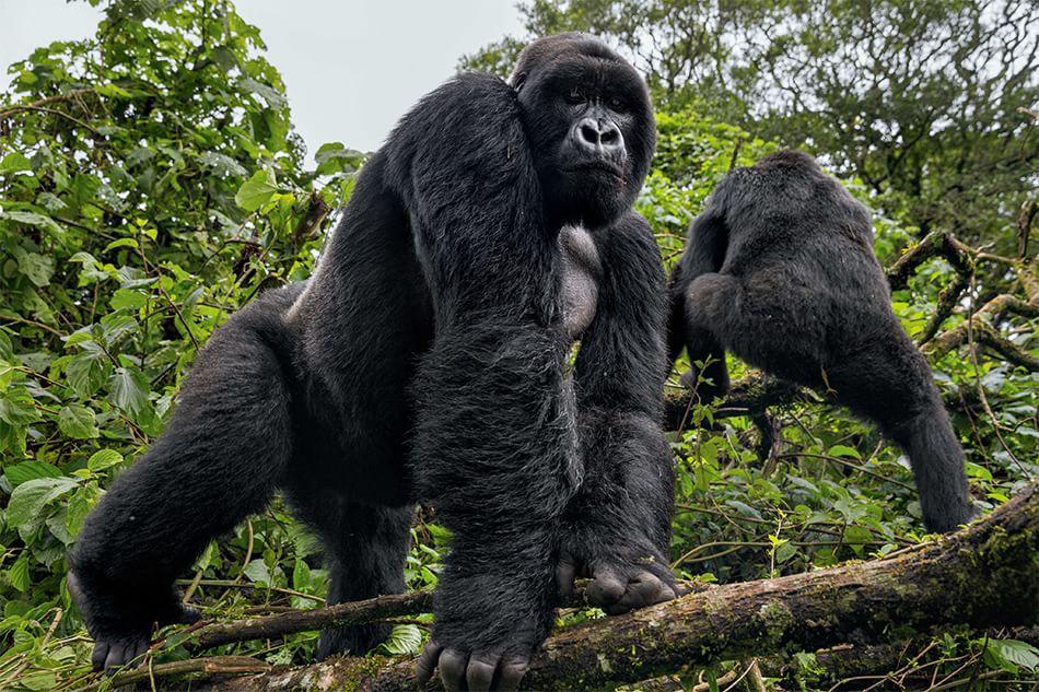 Parco nazionale Virunga
