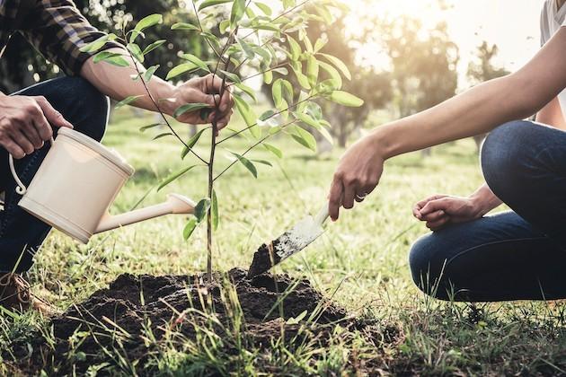 Immagine di due giovani che piantano un albero