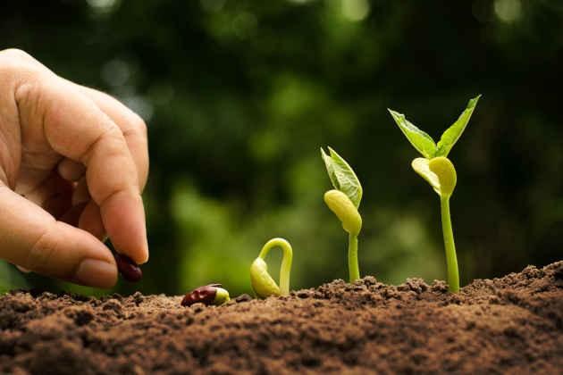 L'immagine della coltivazione di una pianta