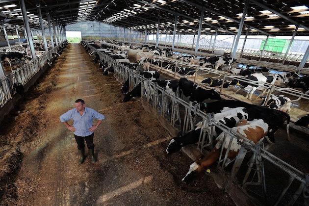 L'immagine di una stalla in cui si effettuano allevamenti intensivi