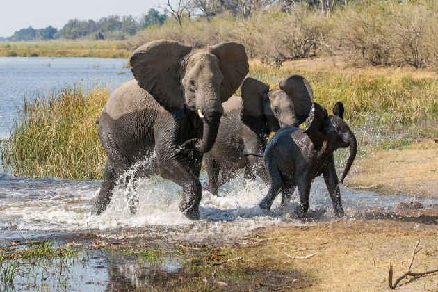 Immagine di elefanti in Botswana