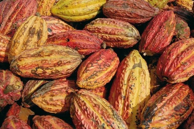 Fairtrade, il marchio di un commercio giusto per tutti