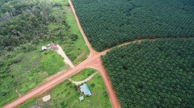Deforestazione da olio di palma foto di Mighty Earth