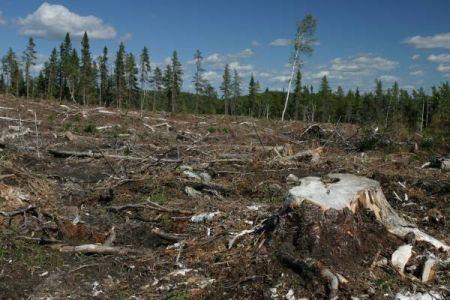 foto deforestazione