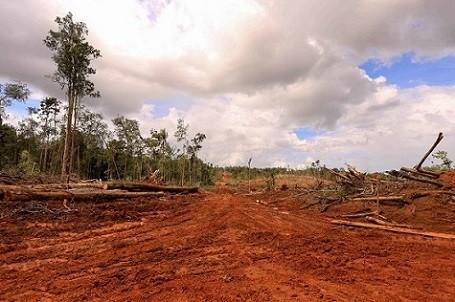 deforestazione olio di palma foto di Mighty Earth