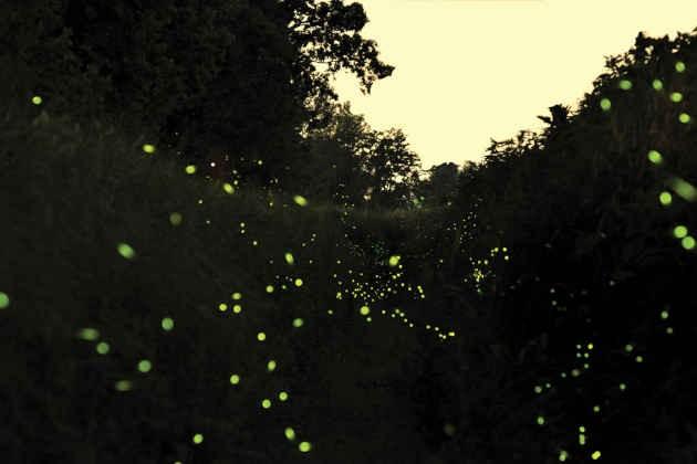 lucciole. Foto di Domenico Barboni