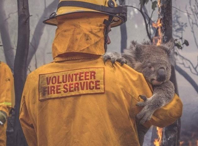 Australia incendi animali uccisi