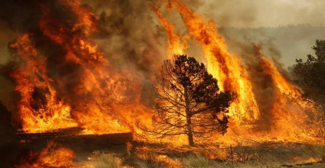 immagini di un incendio boschivo