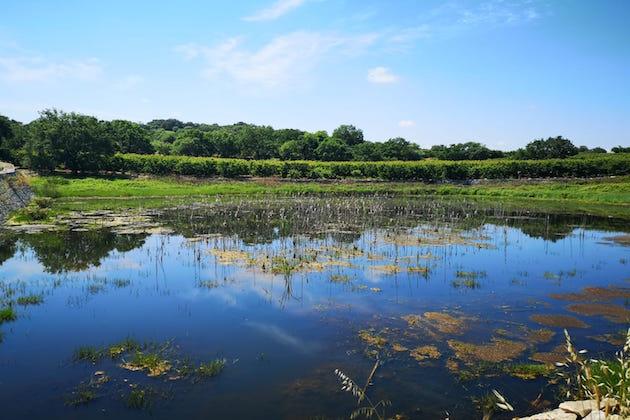 Riserva naturale dei Laghi di Conversano e Gravina di Monsignore