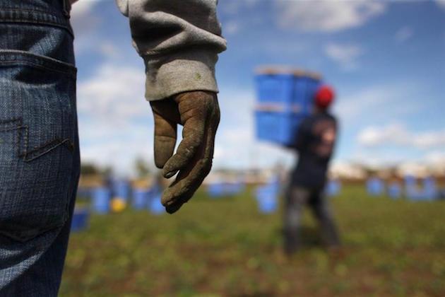 L'immagine di migranti impiegati in campi agricoli