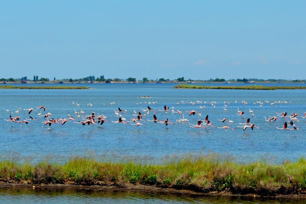 Foto del Delta del Po