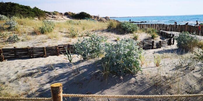 sistema salva dune Parco regionale Punta Pizzo