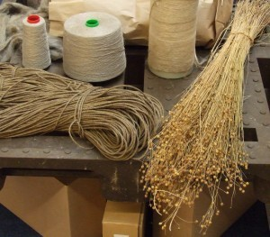 pianta di lino essiccata